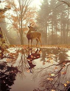 BELLE NATURE........