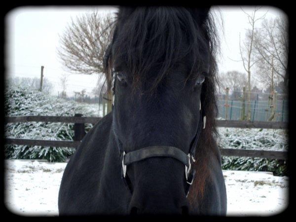 La neige est de retour ...
