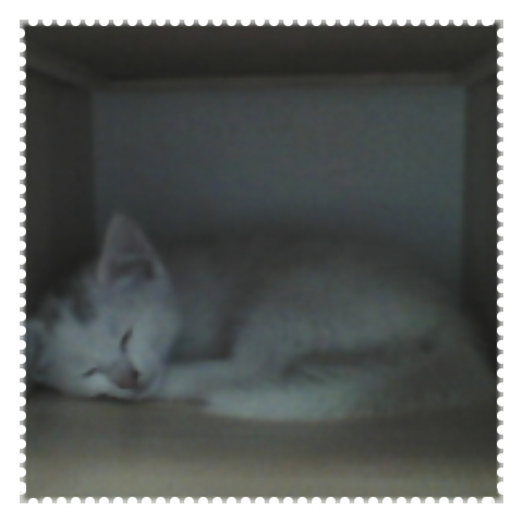 Mon nouveau chaton: Flocon ! ♥♥♥