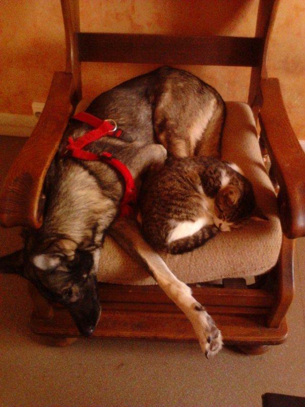 qui a dis que chien et chat ne s'entende pas