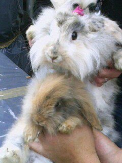Mes 2 Lapins... Mes 2 amours...< 3