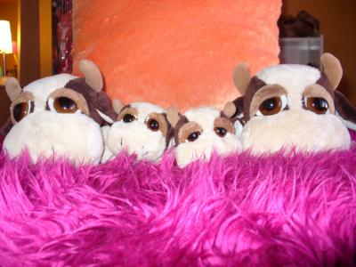 Blog de x palourde x lovee couzz - Jeux de toutou a gros yeux ...