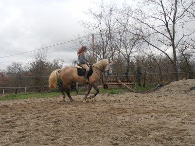 Derniere séance avec mon cheval :