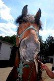 Photo de Wild-Horses-Amazing