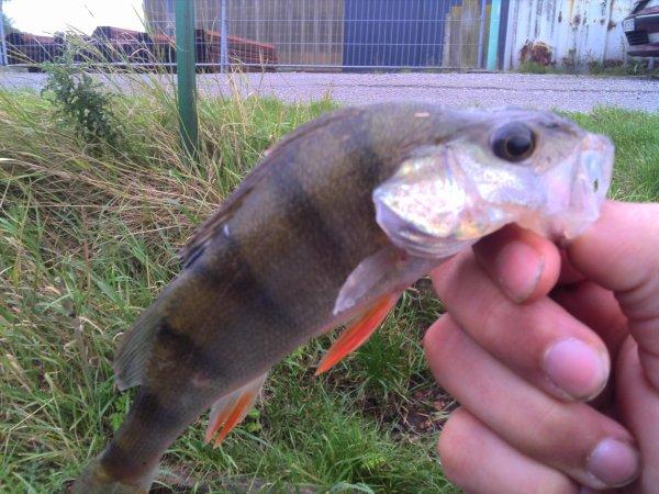 Première partie de pêche au carnassiers