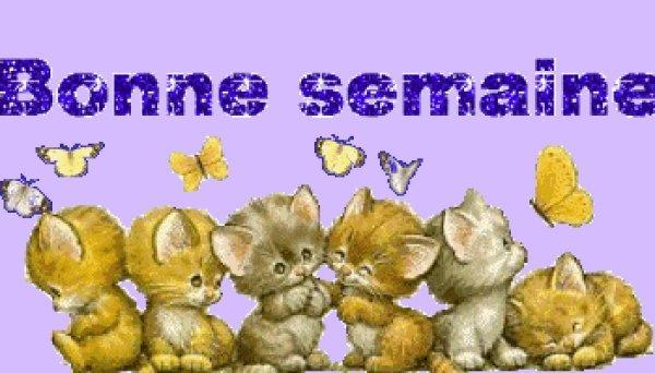 bonjour mes amis je vous souhaite une très bonne semaine