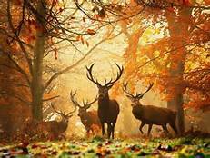 bonjour l'automne