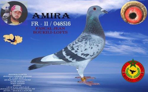 AMIRA 11