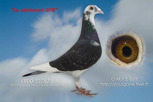 NL 2003 x FR 00