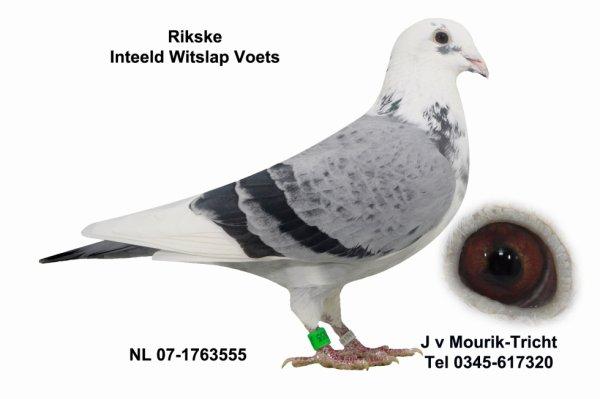 RIKSKE NL 07