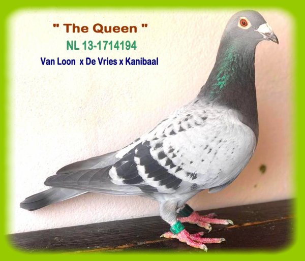 THE QUEEN * NL 13-1714194 F