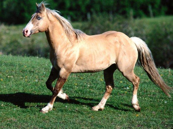 le quater horse