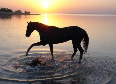 images et gifs sur les chevaux