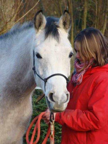 0o Bienvenue sur le blog de mon petit cheval arabe -Riad Ibn Masri- travaillé selon les méthodes éthologiques du haras de la Cense et de Pat Parelli o0