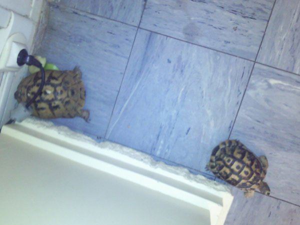 mes tortue