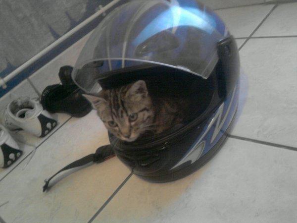 (l) mdr mon chat(l)
