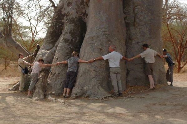 """Résultat de recherche d'images pour """"le baobab senegalais"""""""