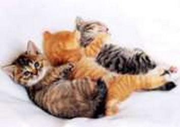 Trois Petits Chats Trop Mignons 17 5 20 Petite Grande