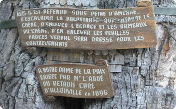 Le chêne millénaire d'Allouville-Bellefosse