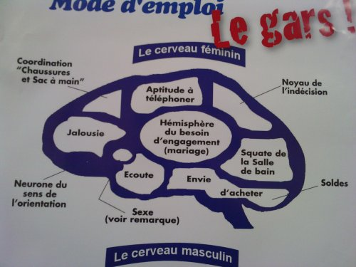 Cerveau féminin