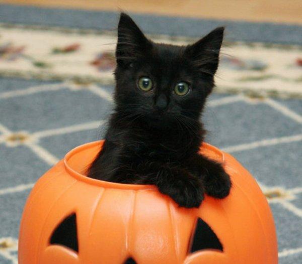 Happy Halloween tout le monde!!