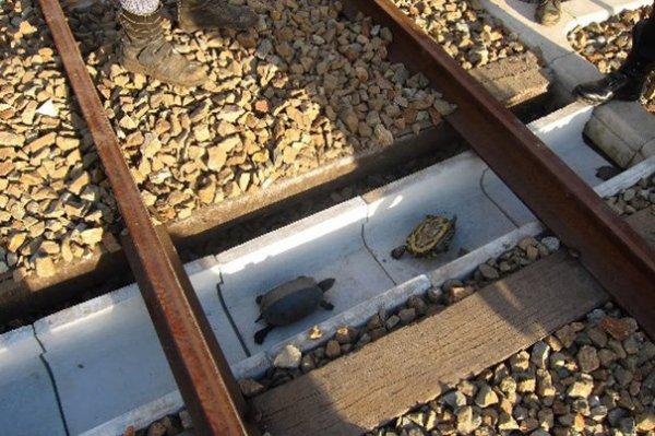 Aprés les passage a gibier voilat les passege a tortue