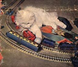 Les chats et les trains une grande histoire