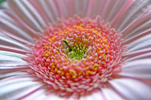 L'amour a son instinct,il sait trouver le chemin du c½ur comme le plus faible insecte marche à sa fleur avec une irrésistible volonté.