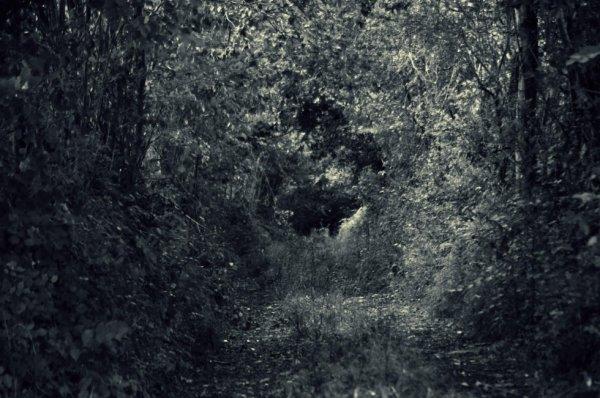 Ne marche jamais sur le chemin tracé,car il ne te mène que là ou d autres sont allés.