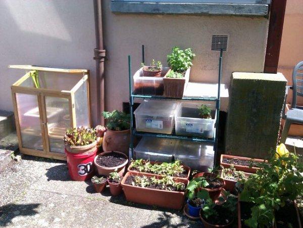 Mon petit jardin sous le soleil