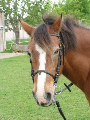 La prière de mon cheval