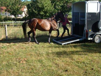 Les vacances de mon cheval : le départ