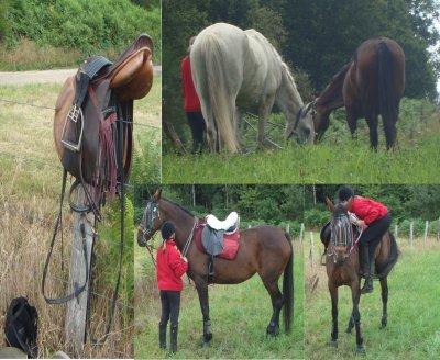 Les vacances de mon cheval : le retour