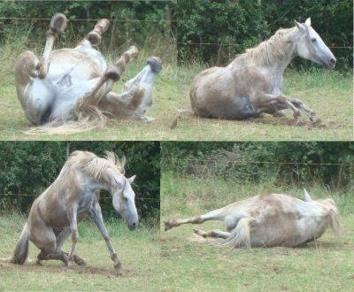 Les vacances de mon cheval : l'arrivé au pré