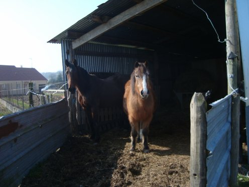 Cheval accident 05/02/2011 LES NEWS