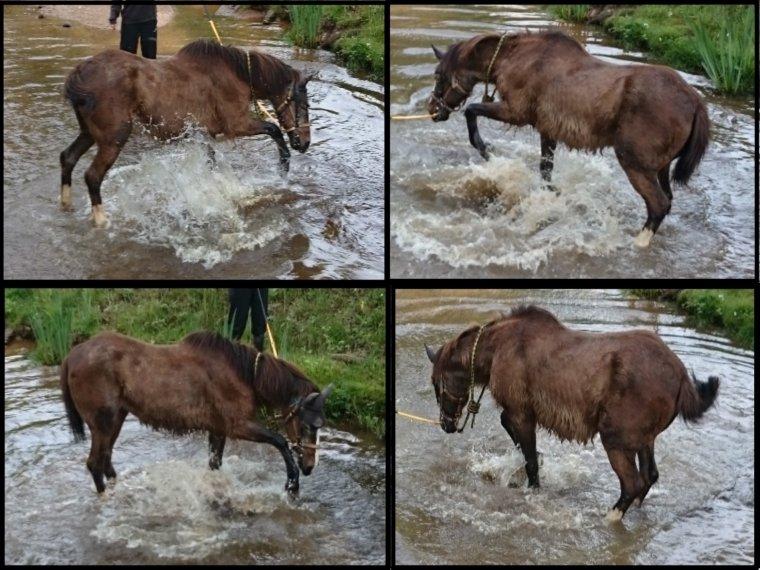 Salty : baignade à la rivière