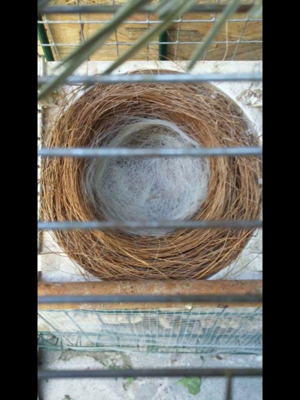 Très beau nid
