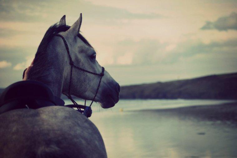 Les chevaux ❤❤