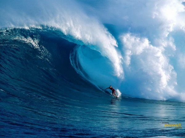 SURF N 1