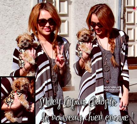 Miley Cyrus a adopter un nouveau chiot trop mignon je le kiff ♥.On la voie avec ce jolie petit chiot dans les bras à Los Angeles, le 6 février 2011