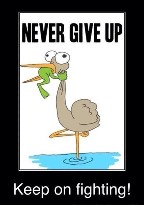 Le ring thérapeutique apprend à ne jamais renoncer !