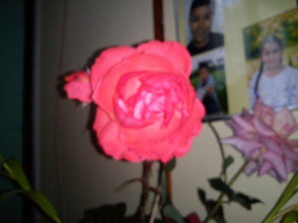 Les fleurs de maman