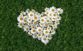 j'aime  cette petite  fleur