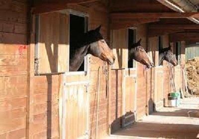 Vie de cheval : Pré ou Box ?