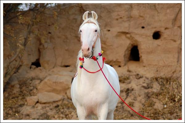Blog équestre sur les chevaux, poneys et ânes...