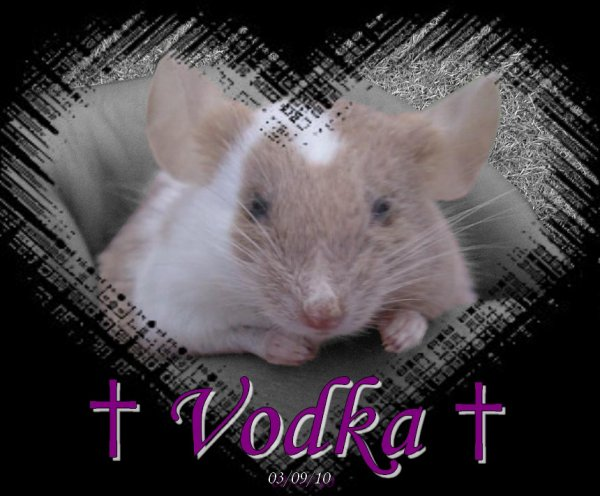 † Vodka †