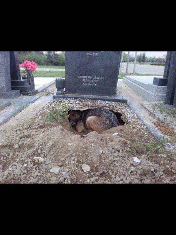 Fidèle jusqu'après la mort...!!!