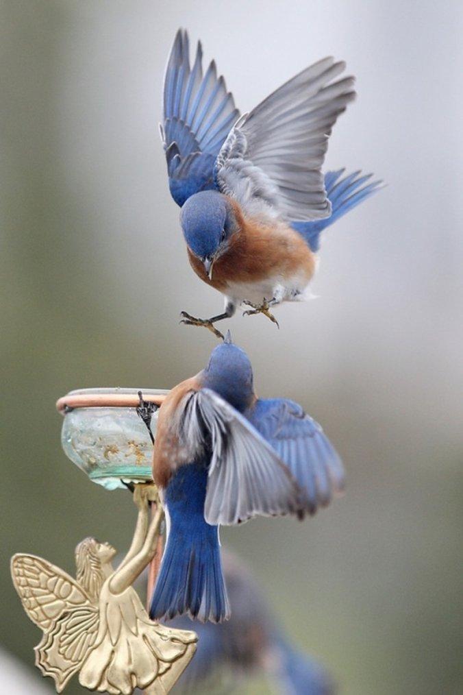 Un peu de douceur !!!! J'adore cette photo !!!!