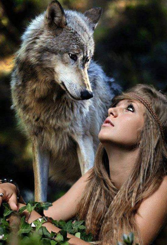 Le monde des loups !!!! (l)