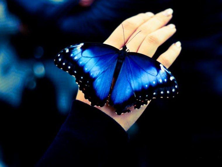 J'adore les papillons !!!!